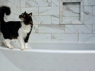 gato-bath-1
